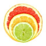 Set of cross a citrus fruits Stock Photography
