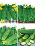 Set of cucumbers Royalty Free Stock Image