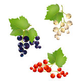 Set currant berries Royalty Free Stock Images