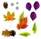 Set of cut autumn leaves, flowers and petals, top view, on a white background, with paths royalty free stock photography