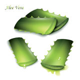 Set of cut pieces of aloe vera. Stock Photography