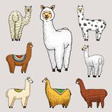 Set of cute Alpaca Llamas or wild guanaco on the background of Cactus and mountain. Funny smiling animals in Peru for. Cards, posters, invitations, t-shirts vector illustration