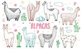 Set of cute Alpaca Llamas or wild guanaco on the background of Cactus and mountain. Funny smiling animals in Peru for. Cards, posters, invitations, t-shirts stock illustration