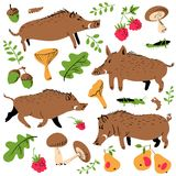 Set with cute boars and forest environmental plants and fruits. Vector illustration with wild pigs. Forest inhabitant in cartoon flat style Royalty Free Stock Photography