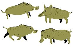 Set with cute boars. Vector illustration with wild pigs. Forest inhabitant in cartoon flat style Royalty Free Stock Photography
