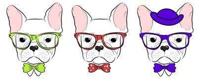 Set of cute bulldog Royalty Free Stock Image