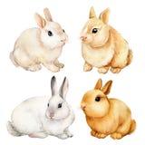 Set of cute bunnies painted in watercolor, beautiful bunny.