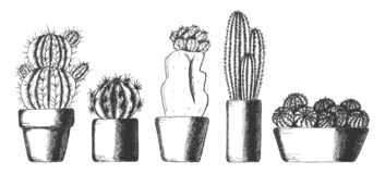 Set of cute cactus houseplants in pots stock photo