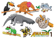 Set of Cute cartoon Animals and birds in the Amazon areas of Sou. Th America isolated on white background. bald uakari monkey, pacu, giant anteater, sloth, red Royalty Free Stock Photography