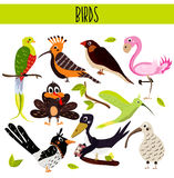 Set of Cute cartoon Animals birds living in different corners of the planet the forests and the jungles. Flamingo, kiwi, magpie, c Stock Photos