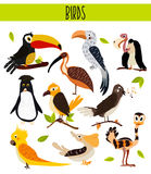Set of Cute cartoon Animals birds living in different corners of the planet the forests and the jungles. Toucan, vulture, parrot, Royalty Free Stock Photos