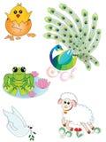 Set of Animals Royalty Free Stock Photos