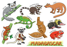 Set of Cute cartoon Animals and in the Madagascar areas. Isolated on white background. aye-aye; ring tailed lemmur; fossa; chameleon; tenrec; sportive lemur royalty free illustration
