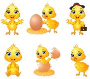 Set of cute cartoon baby chick Royalty Free Stock Photos