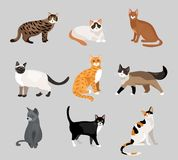 Set of cute cartoon kitties or cats Stock Photos