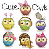 Set of cute cartoon owls Stock Photo