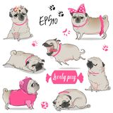 Set with cute cartoon pug vector illustration