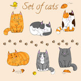 Set of cute cats Stock Photo