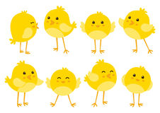 Set of cute chickens. Set of cute cartoon chickens royalty free illustration