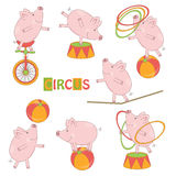 Set of cute circus little pig Royalty Free Stock Photography