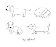Set of cute dachshund illustration in different poses. Royalty Free Stock Images