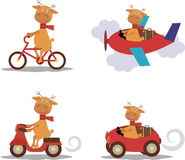 Set - cute deer with scarf on transport Royalty Free Stock Images