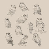 A set of cute different species of owls Royalty Free Stock Photo