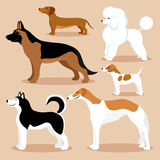 Set of cute dogs. Set of cute dogs on a beige background Stock Photography