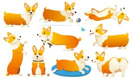 Set of cute dogs breed Welsh Corgi Pembroke on white background. A domestic pet, a happy royal animal for girls. Funny. Red haired puppy looks like a fox royalty free illustration