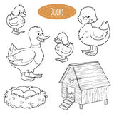 Set of cute farm animals and objects, vector family ducks. Colorless set of cute farm animals and objects, vector family ducks Royalty Free Stock Photography