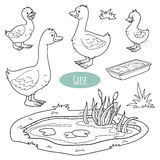 Set of cute farm animals and objects, vector goose family. Colorless set of cute farm animals and objects, vector goose family Royalty Free Stock Photos