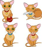 Set of cute ginger cats. Cartoon character. Stock Images