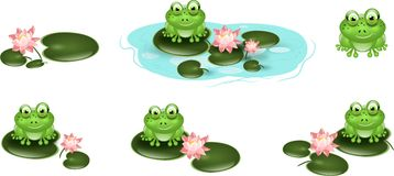 Set of cute green frogs on waterlily Stock Images