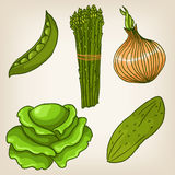 Set of cute hand drawn vegetables Royalty Free Stock Photography