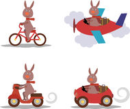 Set - cute hare with scarf on scooter, bike, airplane, car Royalty Free Stock Images
