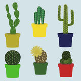 Set of cute indoor cacti. Flat style. vector illustration royalty free illustration