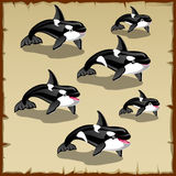 Set of cute killer whales, six icons Royalty Free Stock Photos