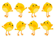 Set of cute little chickens Royalty Free Stock Photos