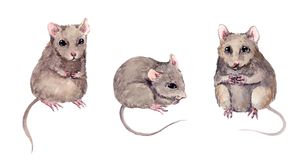 Set of cute mice. Watercolor hand painted mouse animal