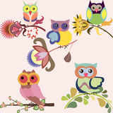 Set of cute multicolored owls sitting on flowers Stock Images