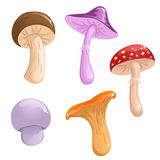 Set of cute mushrooms. Set of cute  mushrooms of different color Stock Photography