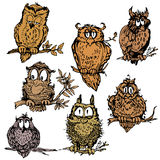 Set of cute owls on branch. Hand drawn picture  on white Royalty Free Stock Photography