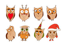 Set of cute owls. Vector cartoon owls and owlets birds isolated on white background. Stock Images