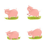 Set of cute pigs Royalty Free Stock Images