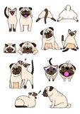 Set of dog and cat pairs. Set of cute Pug dog and Siamese cat , in various posing vector illustration