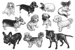 Set of cute puppies. Hand-made black and white drawing of dogs stock illustration
