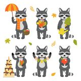 Set of cute raccoon characters isolated on white background. Collection of autumn characters. Vector illustration in royalty free stock images