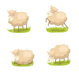 Set of cute vector lambs Stock Image