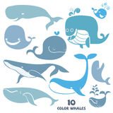 Set of cute Whale Characters. Stock Image