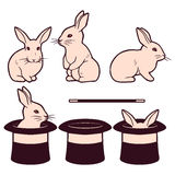 Set of cute white rabbits and cylinders Stock Photography